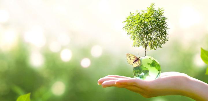 Quels sont les avantages à faire une formation sur le développement durable ?
